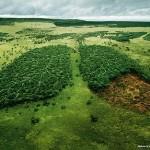 El pulmón verde de la Tierra