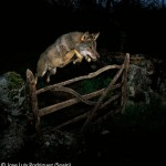 Premios Veolia Environment Wildlife Photographer del 2009