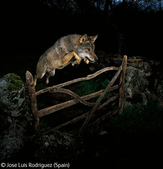 Premios Veolia Environment Wildlife Photographer del 2009