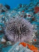 Comienzo de la vida en el océano profundo