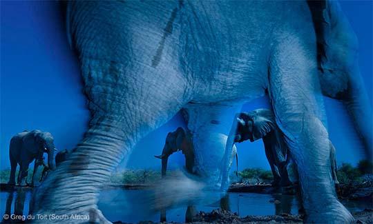 Greg du Toit (África del Sur)  - Essence of elephants