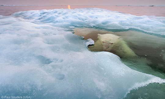 Paul Souders (USA) - The water bear