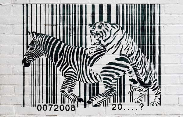 Cebra_tigre