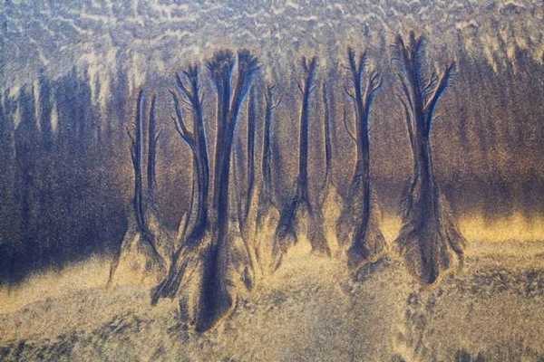 Troncos de arena