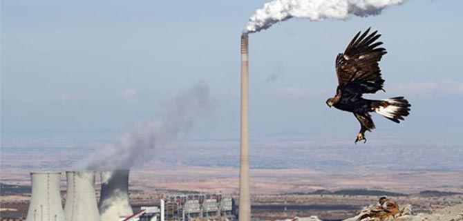 Mejores imágenes ambientales del 2014