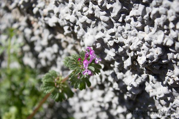 Flor-silvestre-4