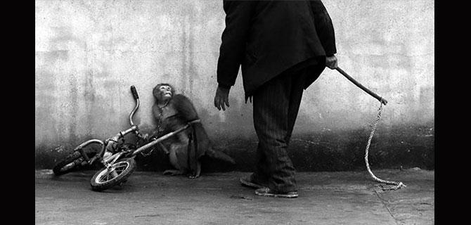 Mono cuidador