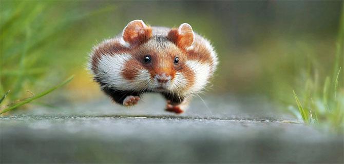 Imágenes graciosas de animales salvajes