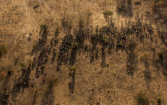 Brent-Stirton-Elephant